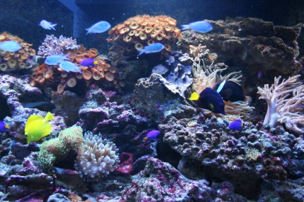 Wasserbillig aquarium has 15 tanks with tropical and freshwater fish