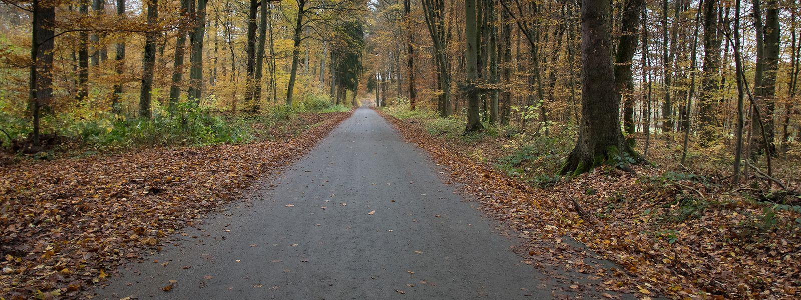 An diesem Radweg bei Leudelingen entsorgten die Täter die Leiche des ersten Mordopfers.