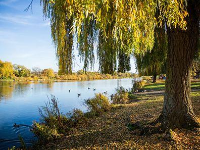 Mosel, Herbst, Automne, Foto Lex Kleren