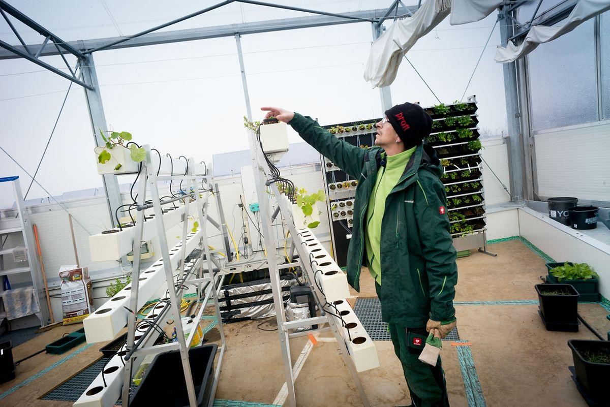 Emile Unsen arbeitet seit drei Jahre im Dachgewächshaus.
