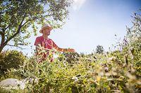 Wie mache ich den Garten winterfit? Reportage bei der Kooperative Terra, Foto Lex Kleren