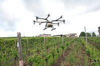 Aus der Luft verspritzt die Drohne die Lösung mit dem Fungizid - besonders praktisch bei aufgeweichtem Boden.
