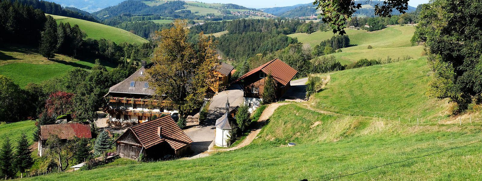Der Hochschwarzwald bei St. Märgen: Die Region punktet mit ihrer Landschaft und ihrer Natur.
