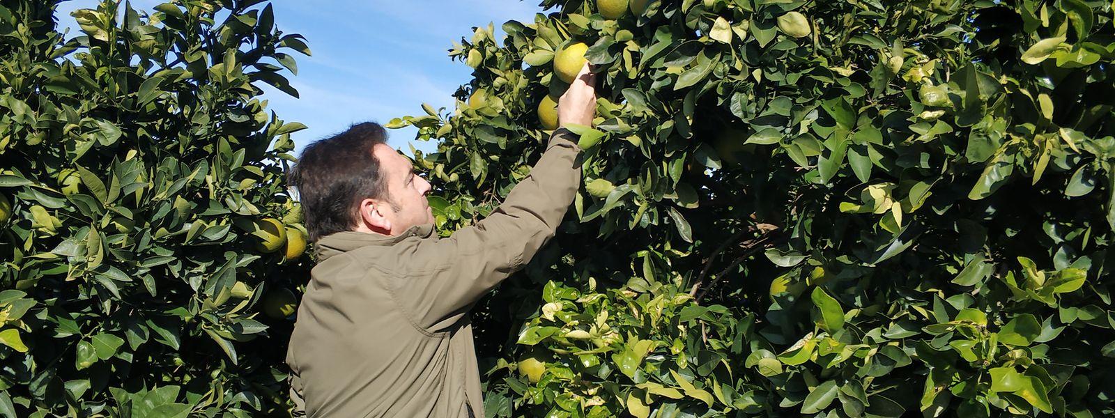 Plantagenbesitzer Luis Bolaños ist zufrieden. Der Verzicht auf rund 90 Prozent der bislang verwendeten Pestizide hat sich für ihn ausgezahlt.