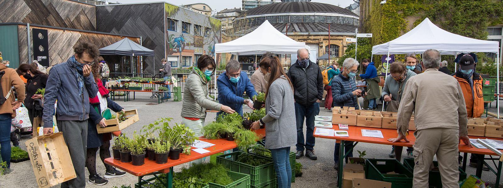 Die Pflanzenbörse brachte am Samstag lokale Produzenten und ihre Pflanzen zum Verbraucher und Hobbygärtner.