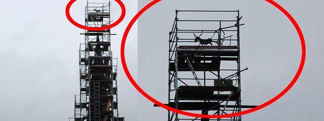 Ein neues Tier stolziert auf dem Kirchturmdach.