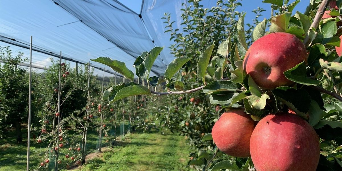 Die Obstbauern zeigen sich mit der aktuellen Erntelage zufrieden.