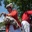 Queen's Swan Marker, David Barber carries a swan onto the banks of the river for weighing, documenting and measuring during the annual Swan Upping Census on the River Thames at Staines, Middlesex on July 17, 2017.  Swan Upping is the annual census of the swan population on stretches of the River Thames and dates from the twelfth century when the Queen claimed ownership of all mute swans and is overseen by the Queen's Marker. The census takes place over five days on the third week of July every year.  / AFP PHOTO / CHRIS J RATCLIFFE