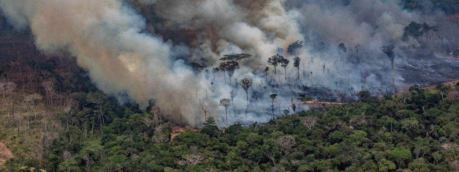 """Der Amazonas, die """"grüne Lunge"""" des Globus, brennt. Die Weltgemeinschaft muss eine Lösung im Interesse aller finden."""