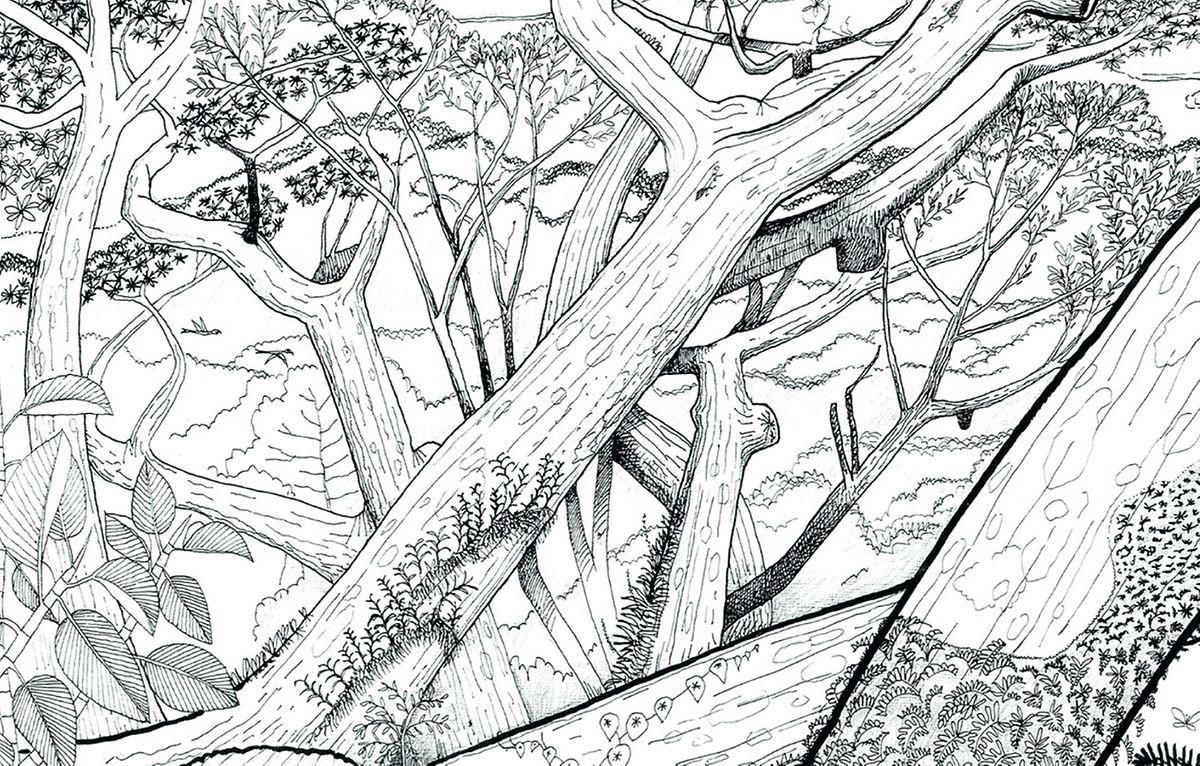 Des arbres aux silhouettes étonnantes.
