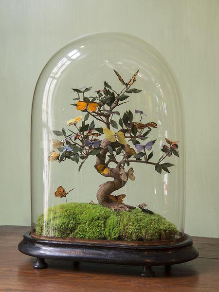 Dekorative Ausstellungsstücke unter Glas waren schon vor über 100 Jahren bei der Kundschaft beliebt.