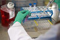 23.03.2020, Bayern, München: Eine Mitarbeiterin am Institut für Virologie der technischen Universität München (TUM) arbeitet in einem Labor an einer Sterilbank mit Zellkulturen. Foto: Sven Hoppe/dpa +++ dpa-Bildfunk +++