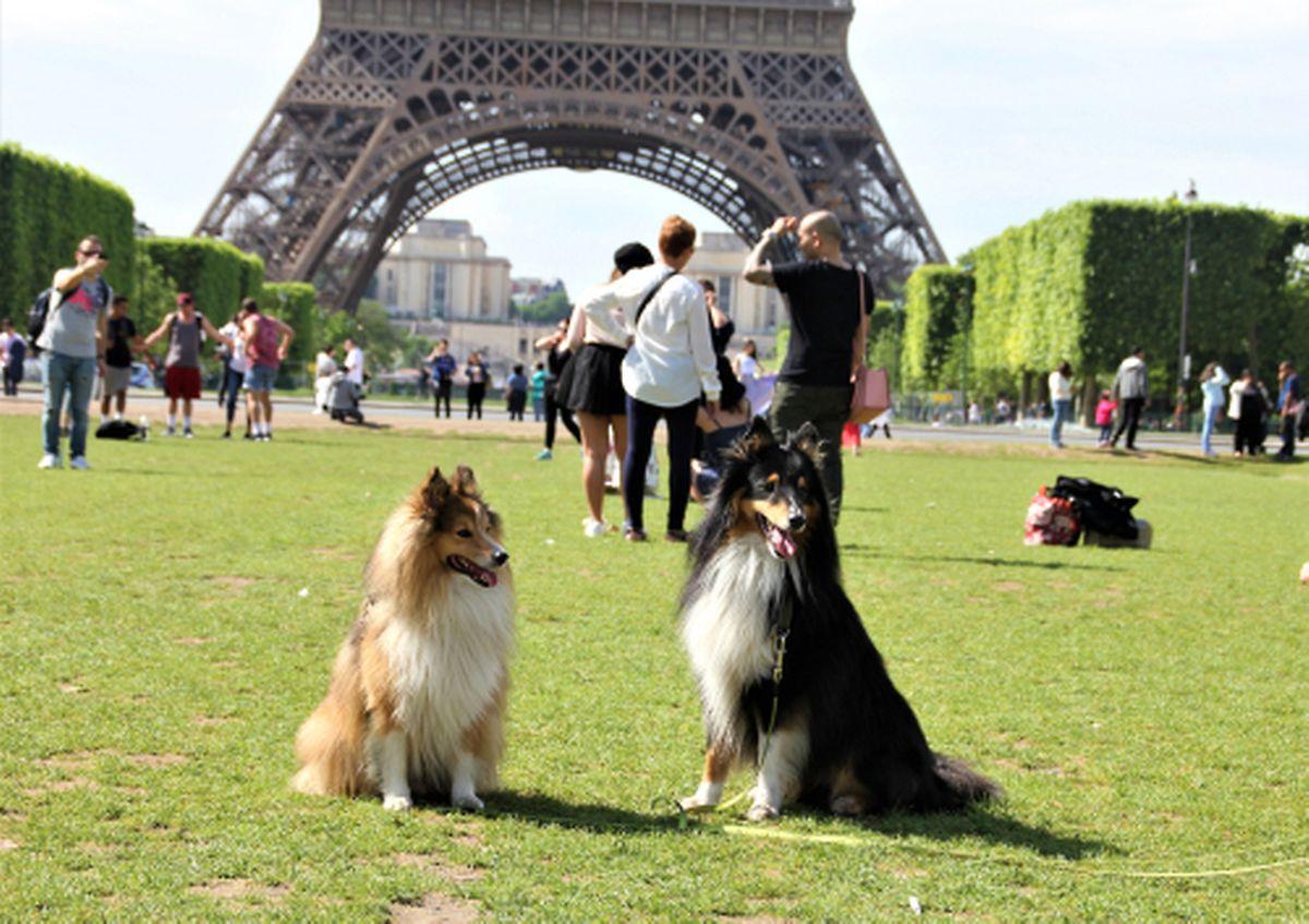 Paris is a surprisingly good city destination for dogs Photo: shutterstock
