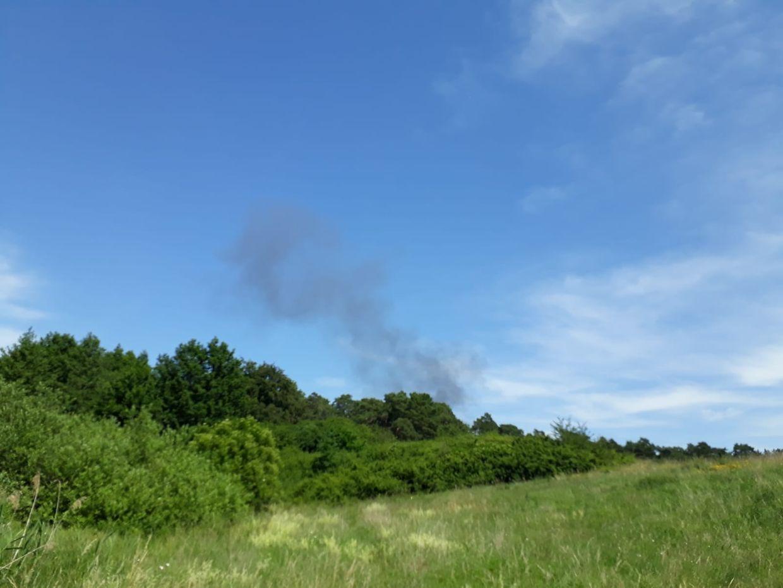 Eine Rauchwolke steigt hinter einem Waldstück auf.