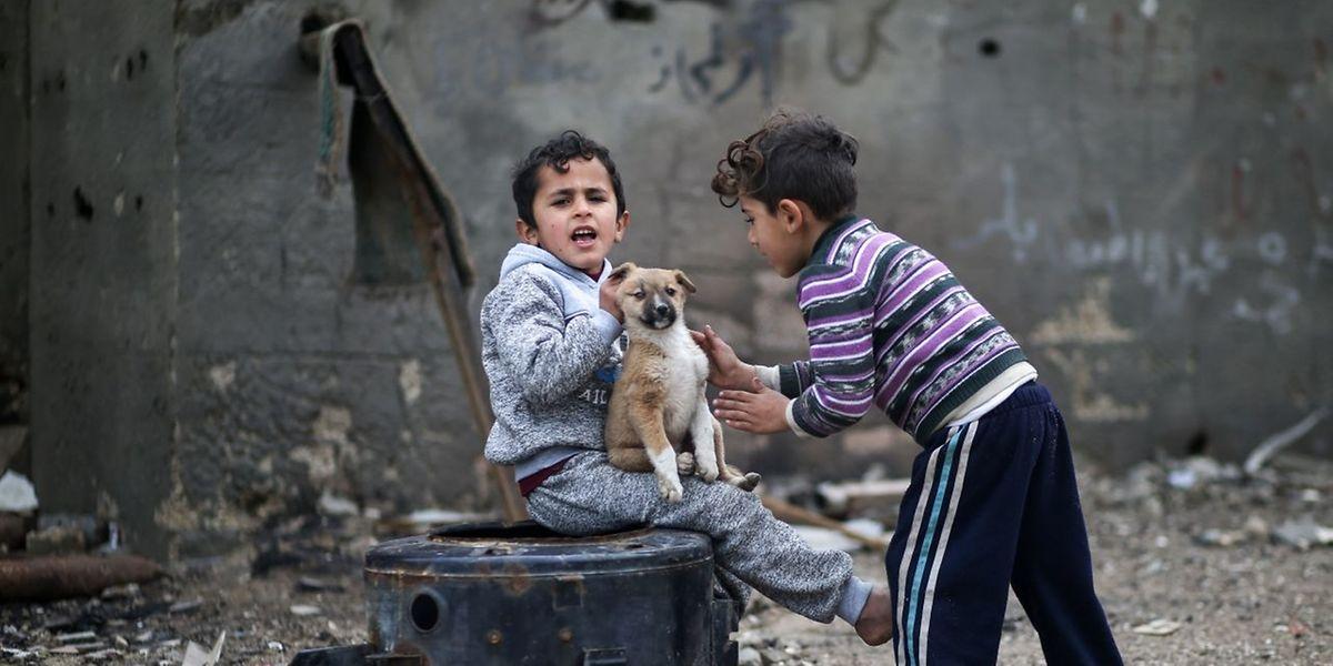 Des enfants jouant avec un chien dans un centre de réfugiés de Gaza.