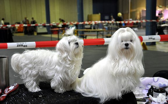 Dogs from a previous International Dog Show in Luxembourg