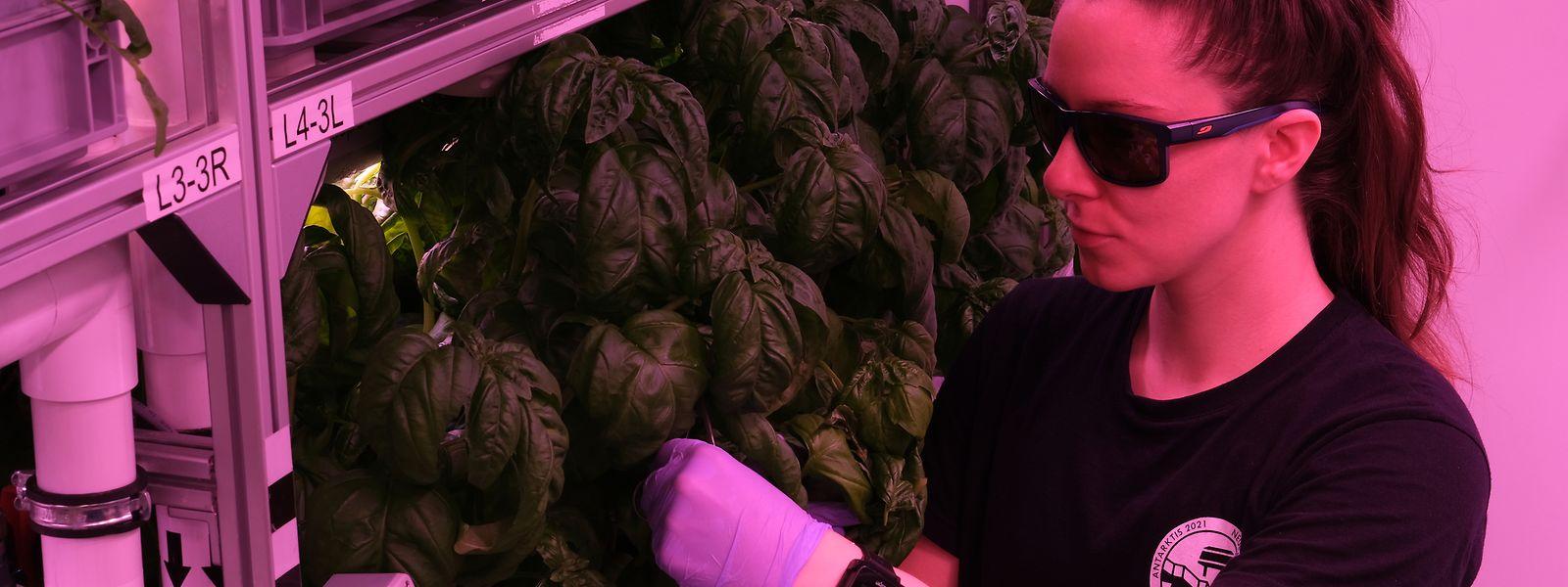 Erforscht wird die Nahrungsmittelproduktion der Zukunft in Wüsten und kalten Regionen.