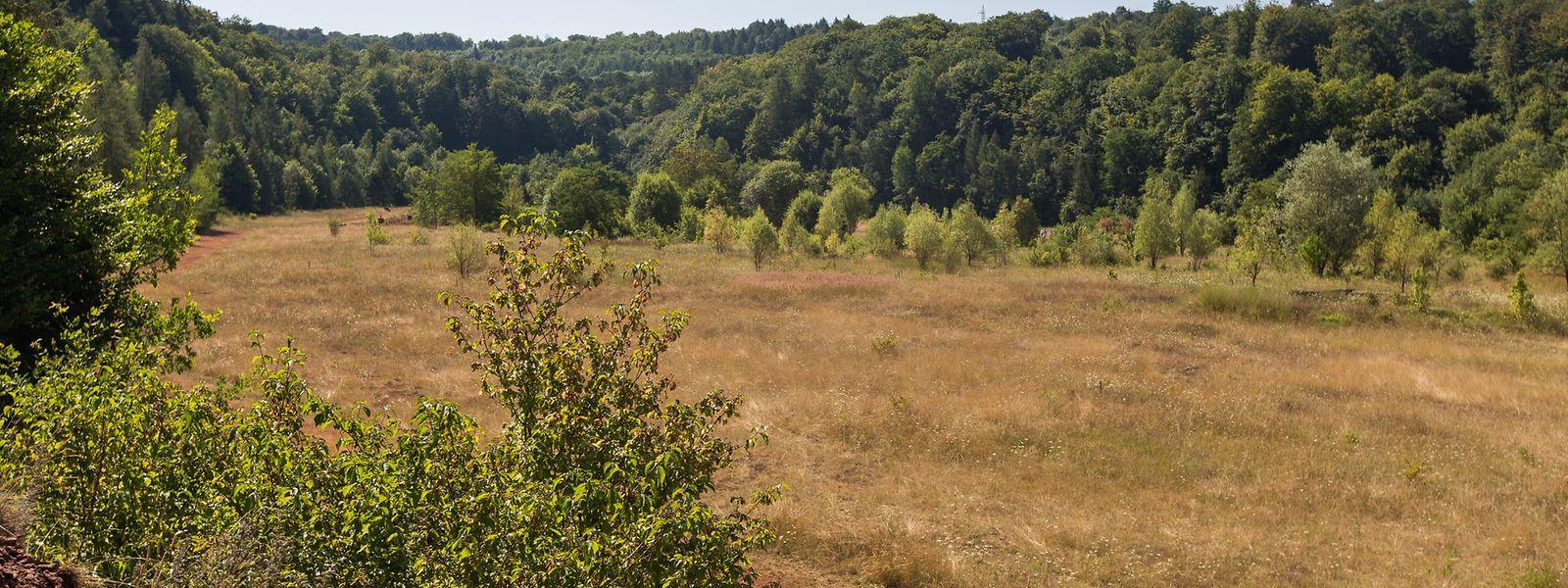 Die früheren Bergbaugebiete im Süden des Landes beherbergen zahlreiche schützenswerte Biotope.