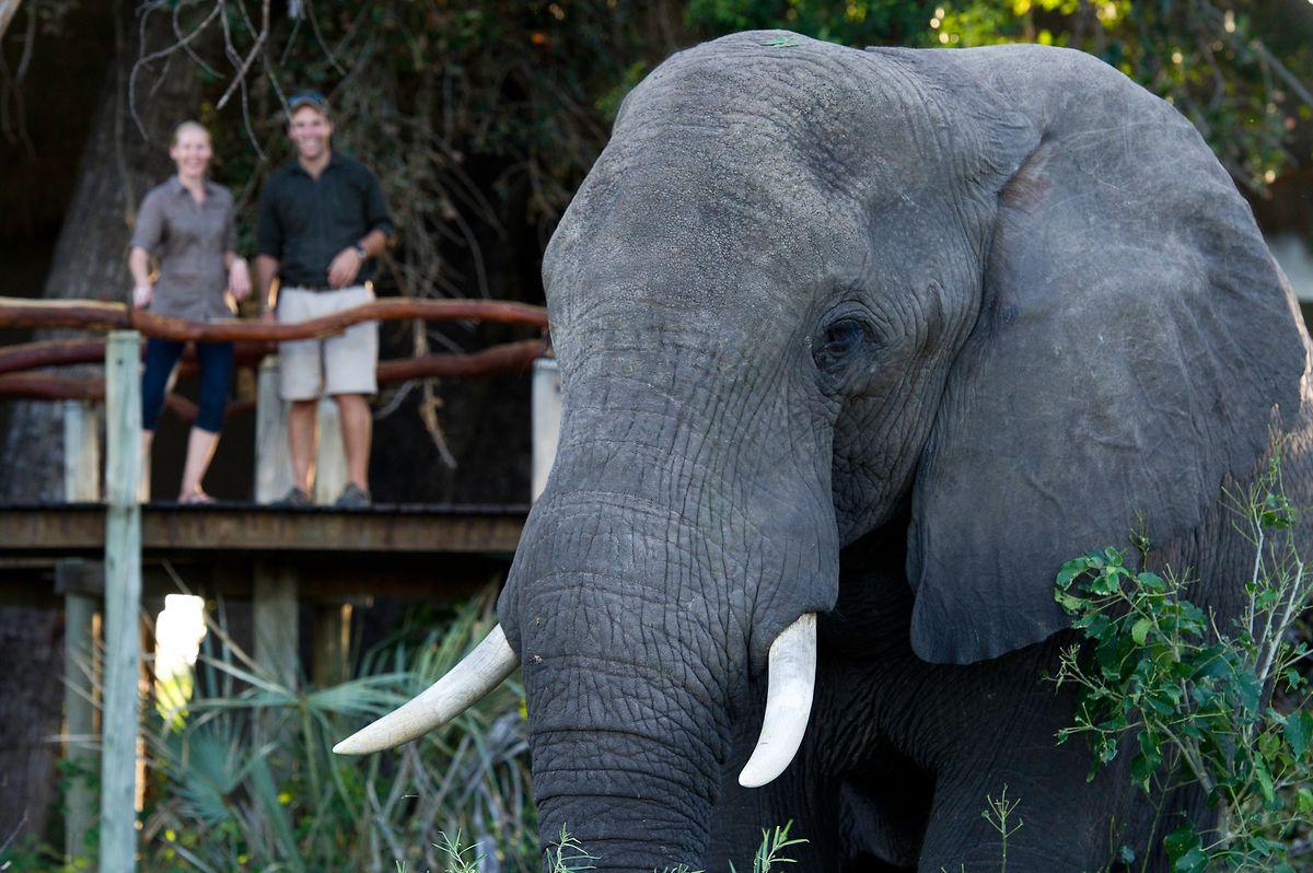Luxuriöse Zeltcamps und Lodges liegen oft an strategisch günstigen Orten für Tierbeobachtungen.