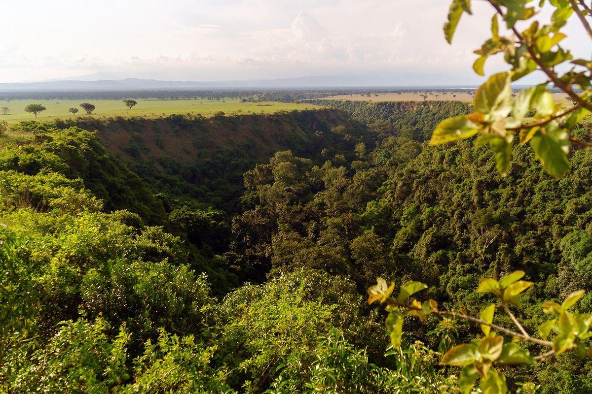 Die Kyambura-Schlucht ist eine Senke in der Savanne und Heimat einer kleinen Schimpansen-Population.