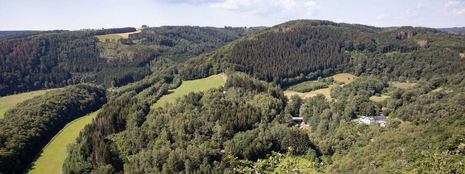 Der Wanderweg in der Nähe von Arsdorf hält was er verspricht: Natur pur.