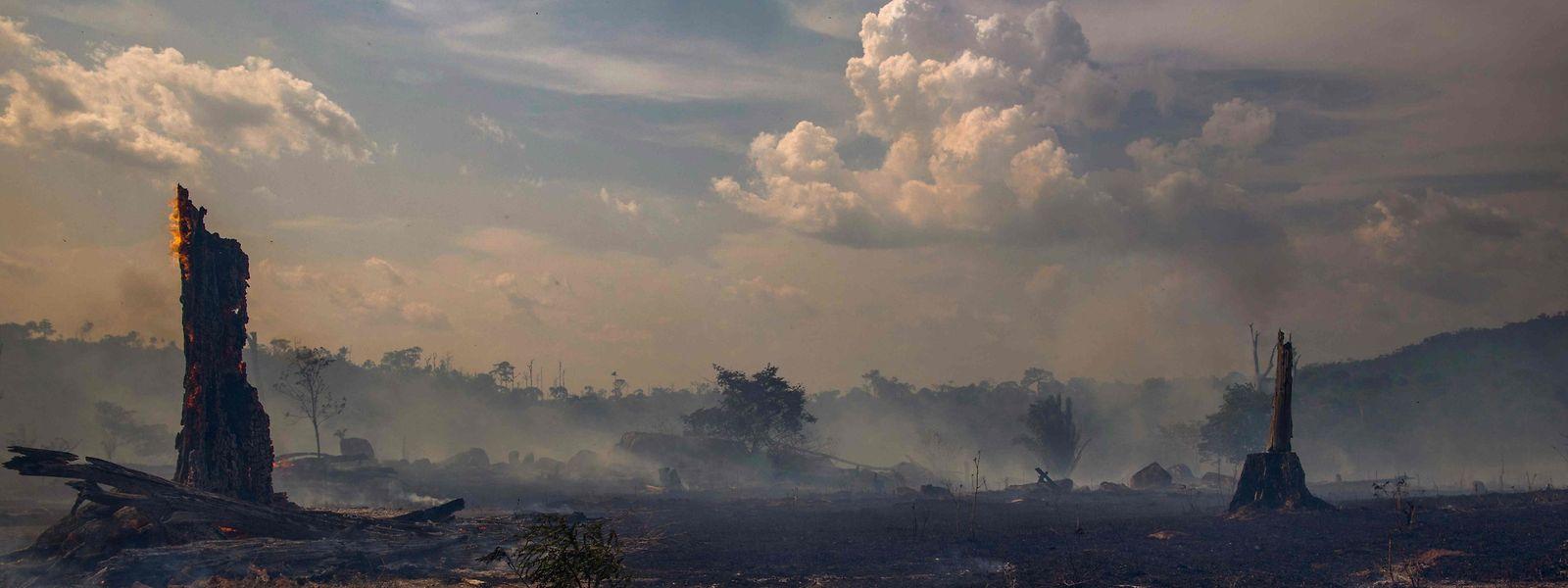 Abgebrannter Regenwald in Altamira, Brasilien.