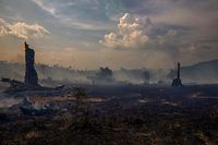 View of a burnt area of forest in Altamira, Para state, Brazil, on August 27, 2019. - Brazil will accept foreign aid to help fight fires in the Amazon rainforest on the condition the Latin American country controls the money, the president's spokesman said Tuesday. (Photo by Joao Laet / AFP)