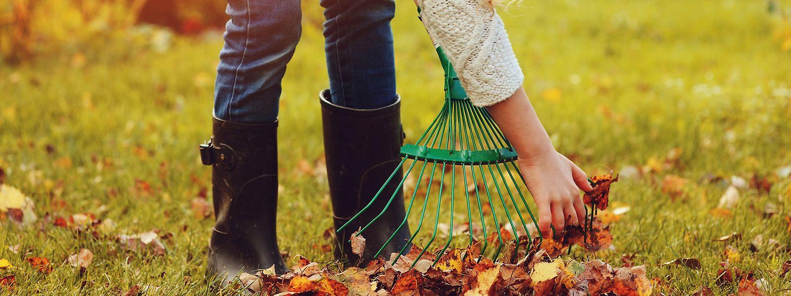 Blätter, die vom Rasen entfernt werden, finden unter Sträuchern einen sinnvollen Platz.