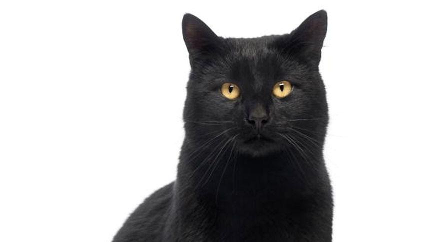 Abmagern bei einer Katze kann viele Ursachen haben.