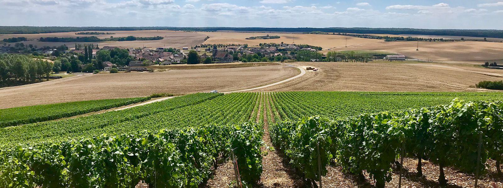 Par-delà des vignes, le village de Champignol-les-Mondeville. 17 caves numérotées sont à découvrir dans la vallée de l'Arce en Seine.