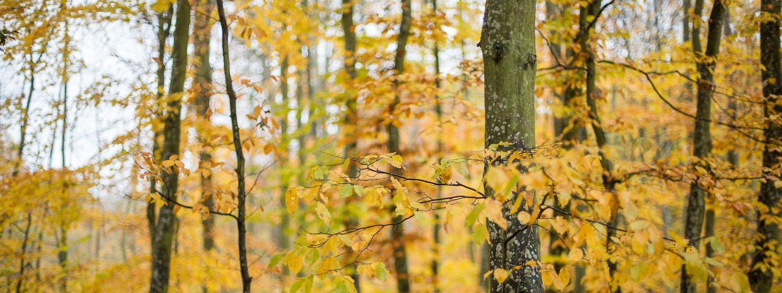 Der Herbst verabschiedet sich. Mit dem 1. Dezember hat der meteorologische Winter begonnen.