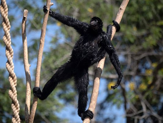 A monkey at the Quinta da Boa Vista Park in Rio de Janeiro, Brazil on May 04, 2021. The Rio BioPark is the new name of the oldest Brazilian zoo, converted into a biodiversity conservation centre