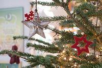 Lok , Haus vun der Natur , nachhaltiger Weihnachtsbaum , Foto: Guy Jallay/Luxemburger Wort
