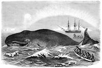 Whale Hunting  - 19th century Engraving