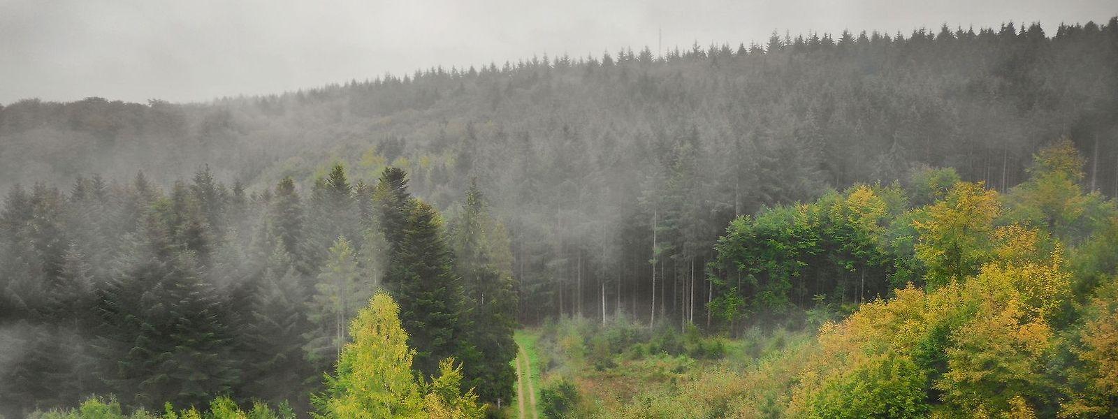 Situé au nord-est de la ville de Luxembourg, le domaine forestier du Gréngewald (4.500 ha), est la propriété de l'État luxembourgeois mais aussi de la cour grand-ducale.