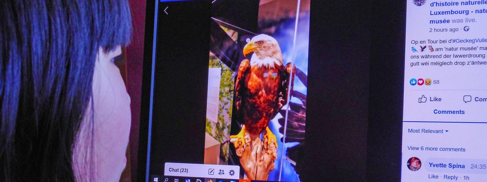 """Vogelwelt frei in der Natur, ausgestopft im Museum und virtuell im Netz. Die Ausstellung """"Geckeg Vullen"""" lässt sich in diesen Tagen der Quarantäne übers Netz besuchen – sogar mit Führung auf der Facebook-Seite des naturhistorischen Museums."""