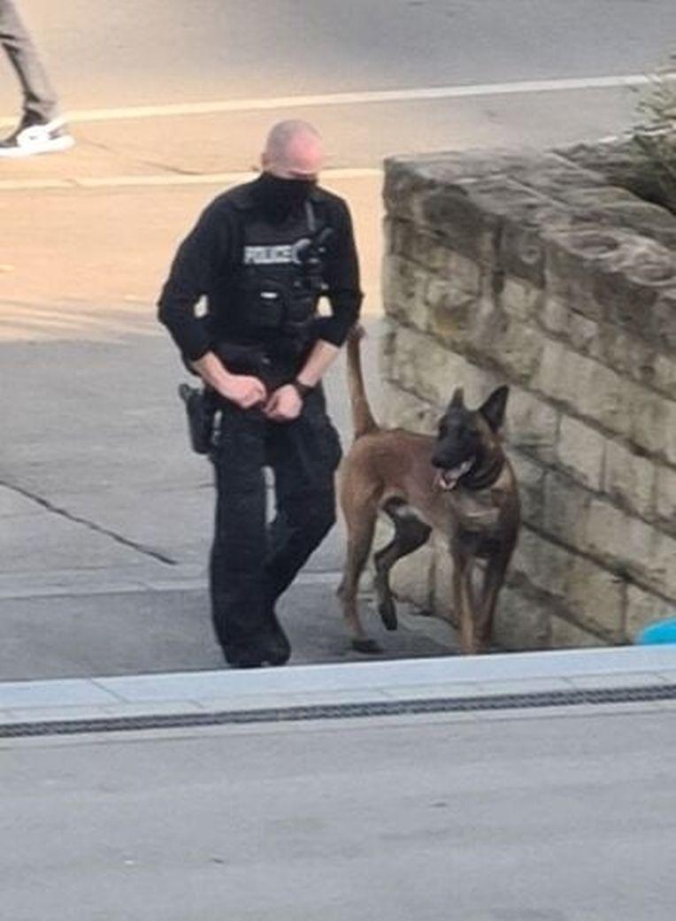 Die Hundestaffel der Polizei ist vor Ort im Einsatz.