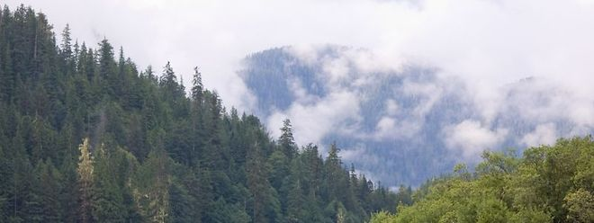 Das neue Naturschutzgesetz soll im kommenden September in der Chamber deponiert werden.