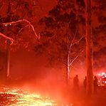 Austrália. Incêndios estão finalmente controlados