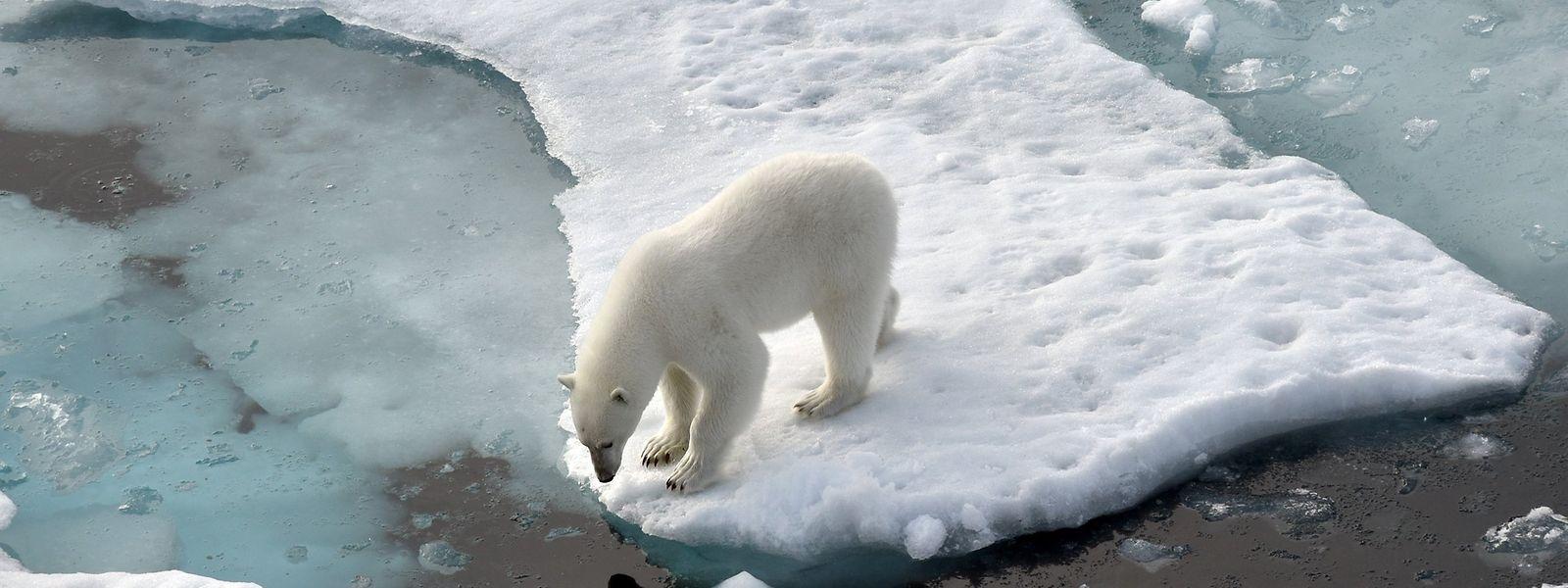 Durch die durch Treibhausgase verursachte Erderwärmung drohen katastrophale Folgen.