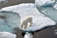 ARCHIV - 14.08.2015, ---, Nordpolarmeer: Ein Eisbär steht im Nordpolarmeer auf einer Eisscholle. Der mehrstündige «Climate Ambition Summit» am 5. Jahrestag des Beschlusses des UN-Klimaabkommens wird per Livestream übertragen. Foto: Ulf Mauder/dpa +++ dpa-Bildfunk +++