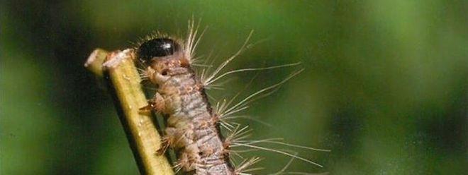 Ces insectes ont envahi l'aire de jeux, contrainte d'être fermée.