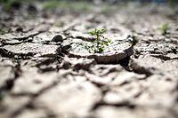 ARCHIV - 23.07.2019, Nordrhein-Westfalen, Düsseldorf: Rissig und ausgetrocknet ist der Boden am Rheinufer. Am 08.08.2019 veröffentlicht der Weltklimarat IPCC einen Sonderbericht. Im Fokus stehen Klimawandel und Landnutzung. Auch die Essgewohnheiten des Westens und Fleischkonsum dürften ein Thema sein. Foto: Federico Gambarini/dpa +++ dpa-Bildfunk +++