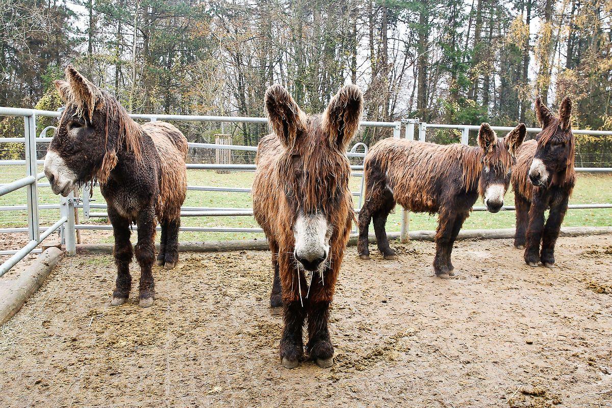 Die vier Tierpfleger erzählten Groß und Klein alles Wissenswerte über Ponnys, Pferde, Esel und Waschbären.