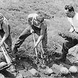 Soldaten bei der Freilegung deutscheer Wurfbomben in Niederwampach am 4. Juli 1963.