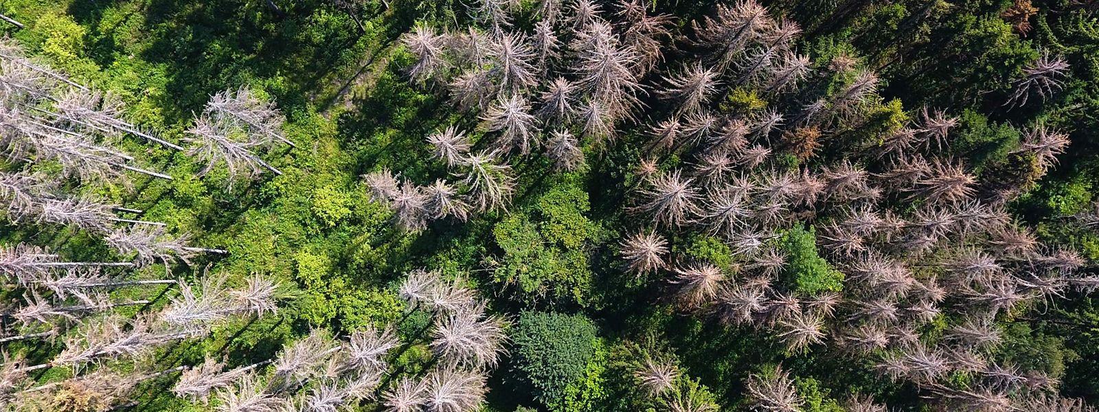 Hitzeschäden in einem Wald in Nieheim im Westen Deutschlands.