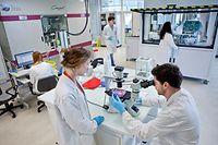 Activités du laboratoire I-Stem