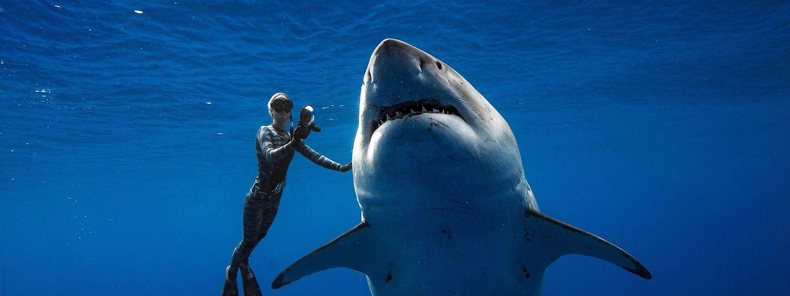 Taucherin Ocean Ramsey ist in der Lage, die von Haien ausgehende Gefahr einzuschätzen.