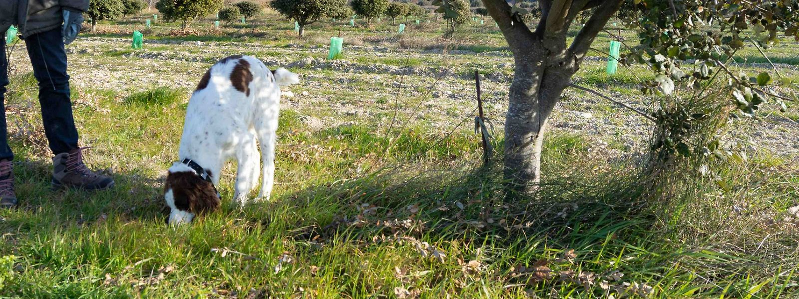 Die Trüffelsuche mit Hunden ist sowohl für Erwachsene als auch für Kinder eine willkommene Abwechslung vom Alltag.