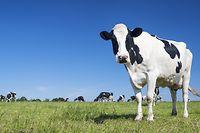 Die Kuh gehört laut Dr. Anita Idel auf die Weide.